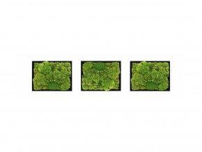 Set 3 mechových obrazů 13x18 z kopečkového mechu, černá