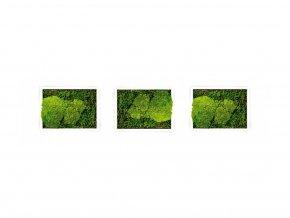 Set 3 mechových obrazů 13x18 kombinovaný mech kopečkový s plochým, bílá