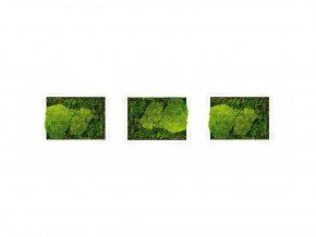 Set 3 mechových obrazů 13x18 z kopečkového mechu v kombinaci s plochým, bílá