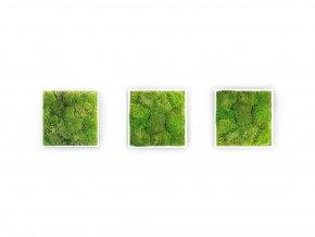 Gardners.cz Set 3 mechových obrazů 22x22 z kopečkového mechu, bílá