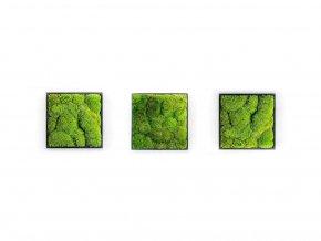 Gardners.cz Set 3 mechových obrazů 22x22 z kopečkového mechu, černá