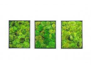 Gardners.cz Set 3 mechových obrazů 30x40 z kopečkového mechu, černá