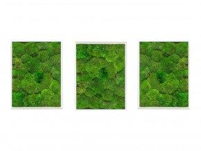 Gardners.cz Set 3 mechových obrazů 30x40 z kopečkového mechu, bílá