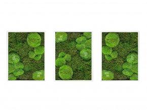 Gardners.cz Set 3 mechových obrazů 30x40 z kopečkového mechu v kombinaci s plochým, bílá