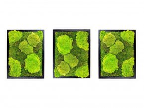 Gardners.cz Set 3 mechových obrazů 30x40 z kopečkového mechu v kombinaci s plochým, černá