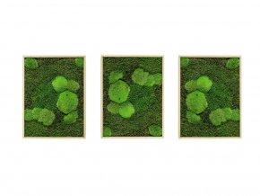 Gardners.cz Set 3 mechových obrazů 30x40 z kopečkového mechu v kombinaci s plochým, přírodní
