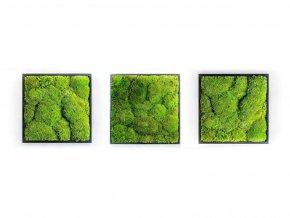 Gardners.cz Set 3 mechových obrazů 35x35 z kopečkového mechu, černá