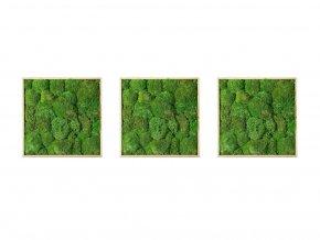 Gardners.cz Set 3 mechových obrazů 35x35 z kopečkového mechu, přírodní