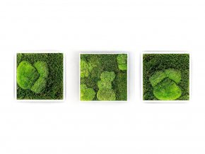 Gardners.cz Set 3 mechových obrazů 35x35 z kopečkového mechu v kombinaci s plochým, bílá
