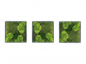 Gardners.cz Set 3 mechových obrazů 35x35 z kopečkového mechu v kombinaci s plochým, černá