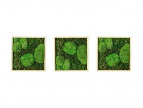 Gardners.cz Set 3 mechových obrazů 35x35 z kopečkového mechu v kombinaci s plochým, přírodní