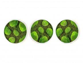 Gardners.cz Set 3 kulatých mechových obrazů 25 cm kopečkového mechu v kombinaci s plochým, bílá