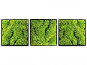 Gardners.cz Set 3 mechových obrazů 50x50 z kopečkového mechu, černá