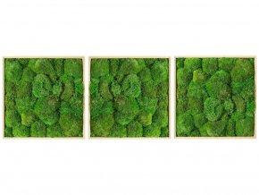 Gardners.cz Set 3 mechových obrazů 50x50 z kopečkového mechu, přírodní