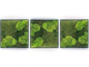 Gardners.cz Set 3 mechových obrazů 50x50 z kopečkového mechu v kombinaci s plochým, černá