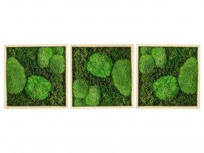 Gardners.cz Set 3 mechových obrazů 50x50 z kopečkového mechu v kombinaci s plochým, přírodní