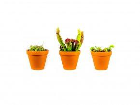 Set rostlin masožravky