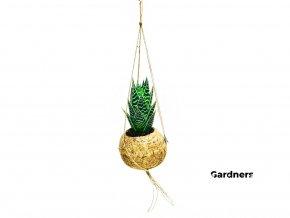 Gardners.cz Kokodama Aloe Tiki tahi (S)