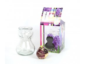 Gardners.cz Skleněná váza s hyacintem4