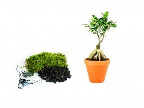 """Kokedama """"Vyrob si sám"""" Ficus Microcarpa Giseng (L)"""
