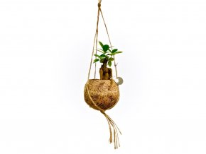 Gardners.cz Kokodama Ficus microcarpa Ginseng (S)