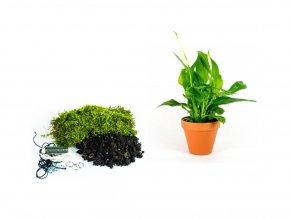 """Kokedama """"Vyrob si sám"""" Spathiphyllum (M)"""