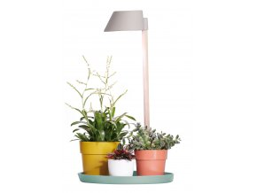 plant light care dove green.c1
