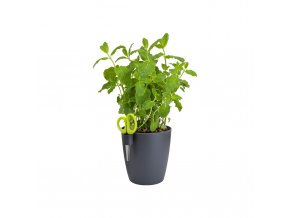 brussels herbs single anthracite mint.c1