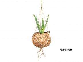 Gardners.cz Kokodama Aloe Vera (L)