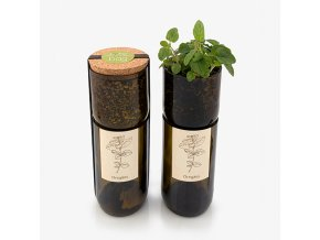 Grow Bottle - Oregáno