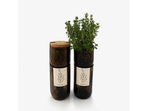 Grow Bottle - Tymián