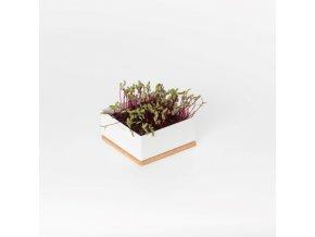 Grow Box Uno - Řepa