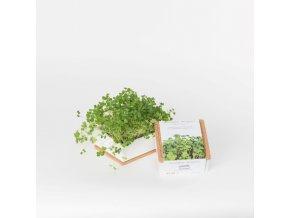 Grow Box Uno - Brokolice