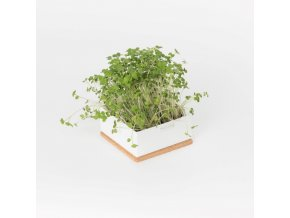 Grow Box Uno - Hořčice