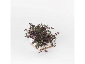 Grow Box Uno - Ředkvička