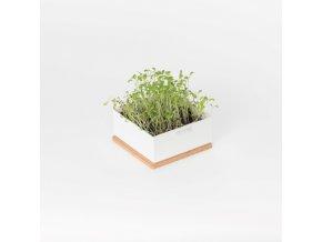 Grow Box Uno - Rukola