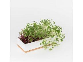 Grow Box Duo - Řepa, Brokolice