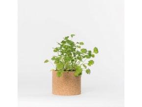 Grow Cork Pot - Koriandr
