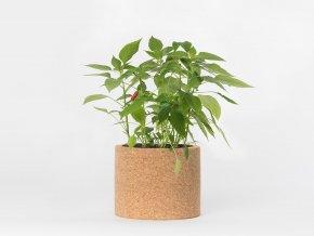 Grow Cork Pot - Chilli paprička