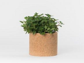 Grow Cork Pot - Oregáno