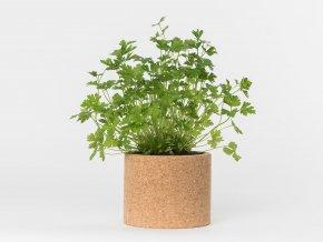 Grow Cork Pot - Petržel