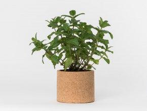 Grow Cork Pot - Máta