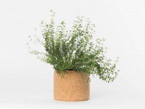 Grow Cork Pot - Tymián