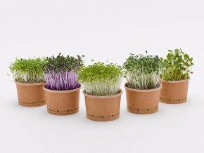 Microgreens pěstební sada XL