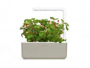 SG3 beige wild strawberry plant