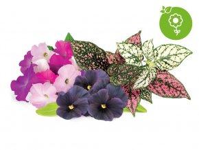 Vibrant Flower Mix 1280x960 icon 1f08f531 15fe 48cf 81d4 46b5f1e395b3 1200x