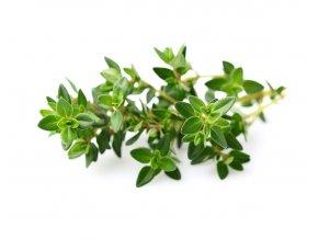Thyme plant 1200x960