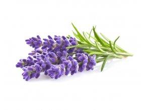 Lavender plant 1200x960