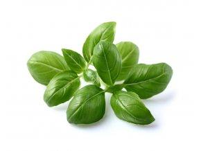 Basil plant 1200x960