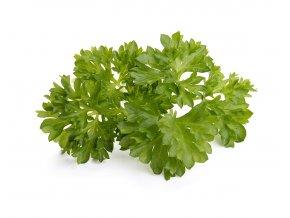 Parsley plant 1200x960